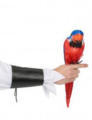 Papagaio das ilhas Havai 40 cm