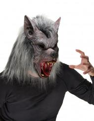 Máscara de lobo mau adulto Halloween