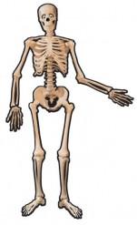 Esqueleto de cartão Halloween
