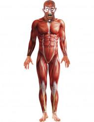 Disfarce anatomia humana adulto