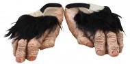 sapatos pés de chimpanzé adulto