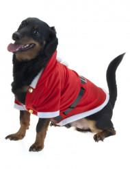 Casaco de natal Cão