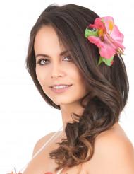 Flor cor de rosa Havaí