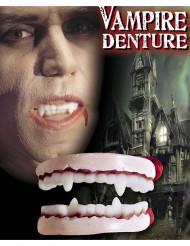 Dentes de vampiro Halloween