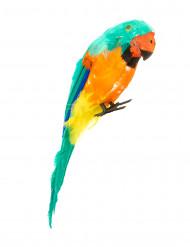 Papagaio verde das ilhas