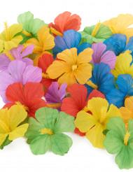 24 flores havaianas
