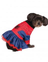 Disfarce para cão Spider Girl™