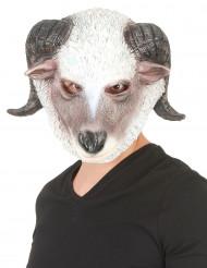 Máscara carneiro látex adulto