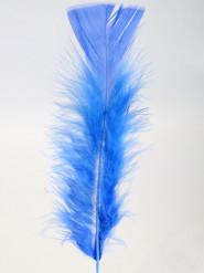 100 Plumas azuis