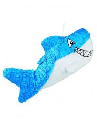 Pinhata tubarão azul