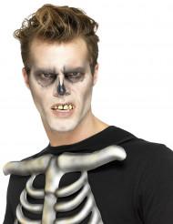 Dentes falsos esqueleto com fixação adulto