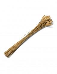 Ramo espigas de trigo natural 60 cm
