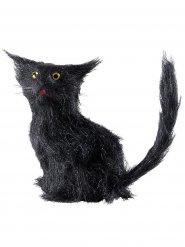 Gato preto Halloween