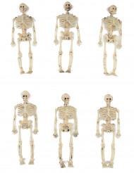 Seis decorações esqueletos