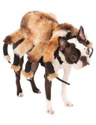 Disfarce para cão aranha gigante