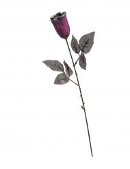 Rosa preta e lilás brilhante