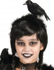 Bandolete corvo adulto e criança