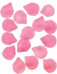 288 Pétalas cor-de-rosa fúschia