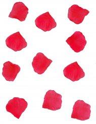 288 Pétalas vermelhas