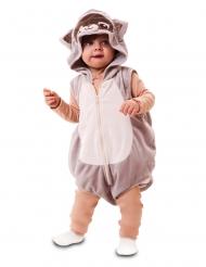 Disfarce guaxinim bebé
