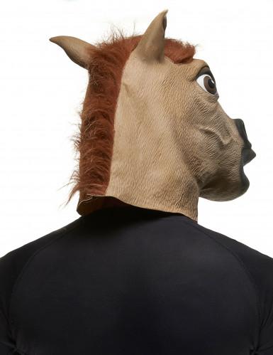 Máscara cavalo adulto-1